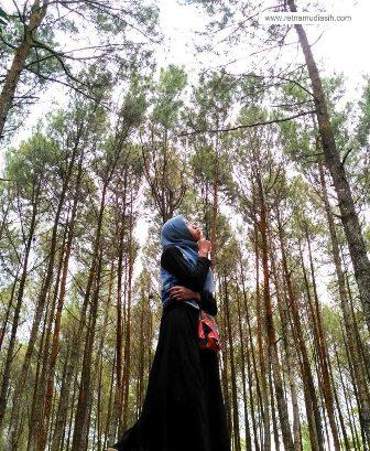 hutan_pinus_imogiri3