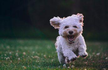 Obat Kulit Anjing dari Berbagai Penyakit